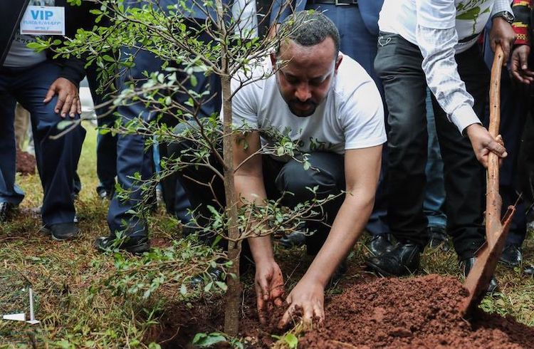 Photo: Ethiopian prime minister Abiy Ahmed plants a tree as part of the reforestation project. Credit: Office of the Prime Minister of Ethiopia.