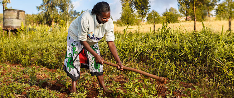 Photo: 70 percent of the population in Africa are smallholder farmers. Credit: Crop Science Bayer.